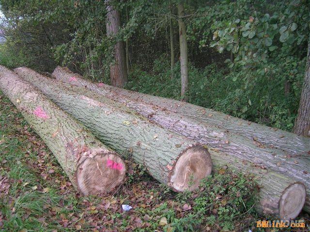 图库  公司名称:启林木业 公司简介:我公司大量出售黄杨木,枣木板